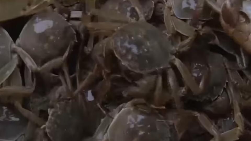 秋季品蟹最佳! 蟹膏濃郁老饕吮指回味