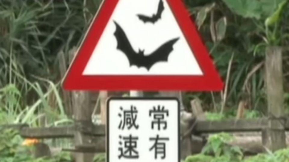 動物也有路權! 當心青蛙出沒 警告標示吸睛
