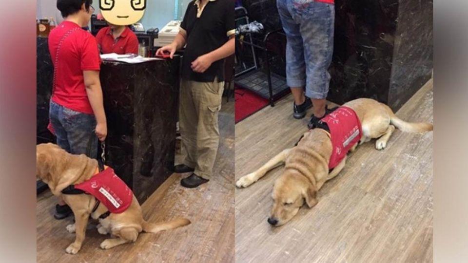 導盲犬Woody用餐遭拒門外 業者PO文討拍反遭重砲轟擊