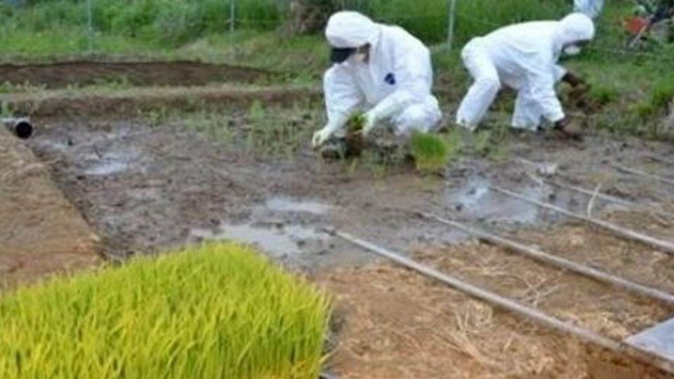 穿防護衣種田?網傳輻射汙染土就在稻田邊 網友「一理由」打臉