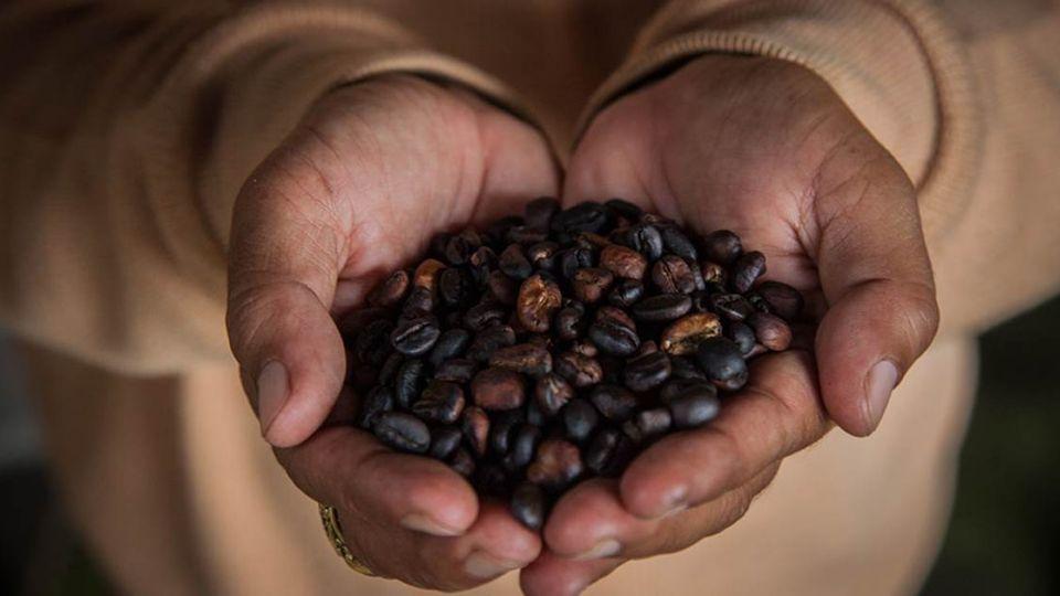 《端傳媒》若干年後,咖啡將成為一種近乎奢侈的商品