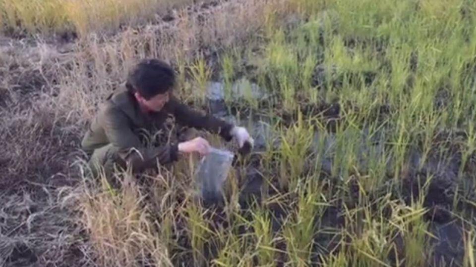 不只千葉!福島實測 土壤也驗出「銫-137」