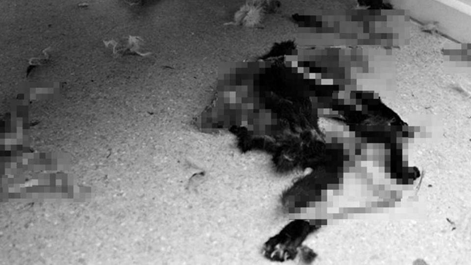 殘忍!婦棄14隻貓關屋內 互相殘殺只剩一殘活