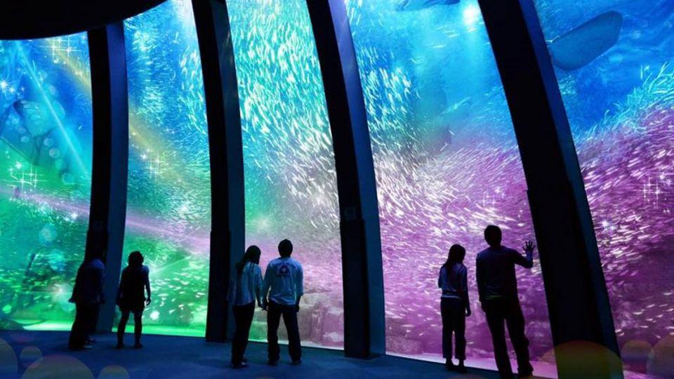 日本最大水族館落腳台灣!10萬動物盡收眼底 桃園偷笑了