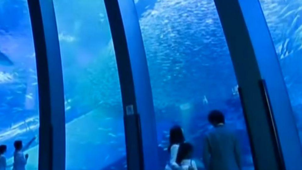 日最大水族館來台 「橫濱八景島」桃園新景點