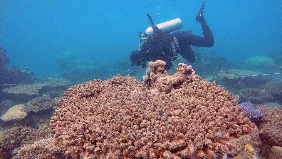 【端傳媒】大堡礁北部近七成珊瑚「快被煮熟」,有研究指氣候變暖為肇因
