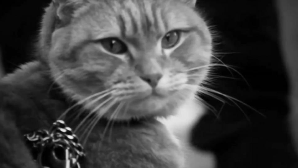 一隻貓改變人生「遇見街貓BOB」溫馨催淚