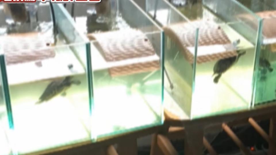 員警養13缸魚龜挨罵鬥長官 檢舉主管上班喝酒