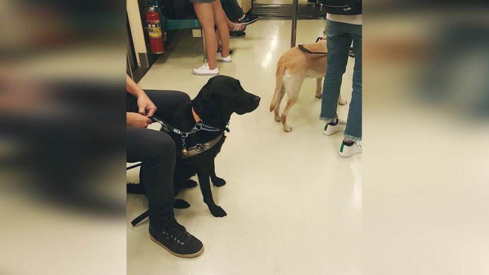神邏輯?導盲犬上捷運 乘客嗆:我也能帶訓練過的獅子老虎!