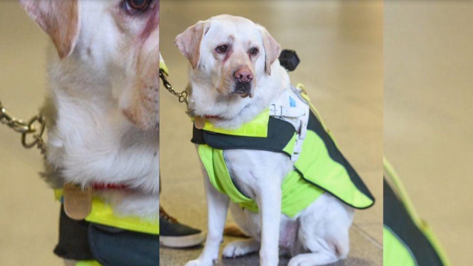 帶導盲犬搭手扶梯被嫌擋路 遭嗆「為失明道歉」