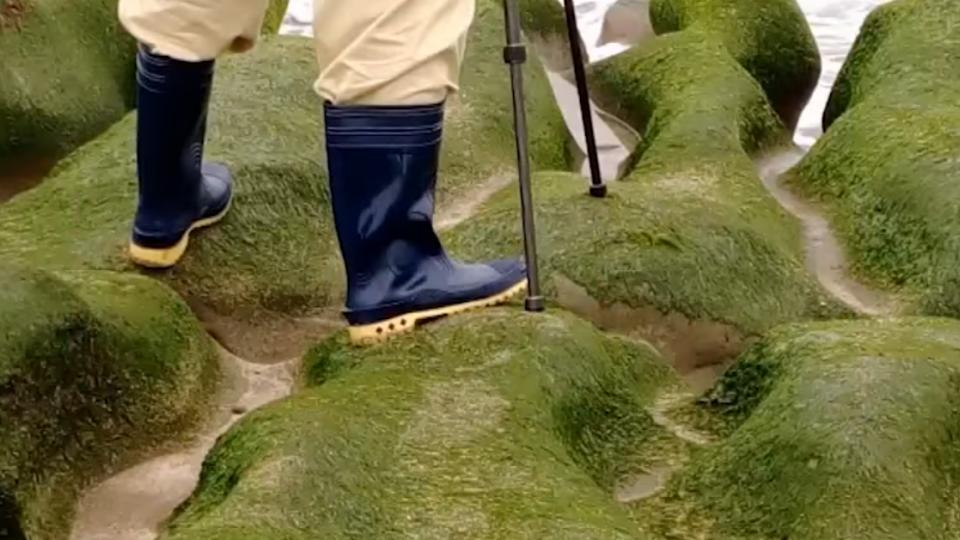 拍照踩踏老梅綠石槽 遊客:不知不能踩