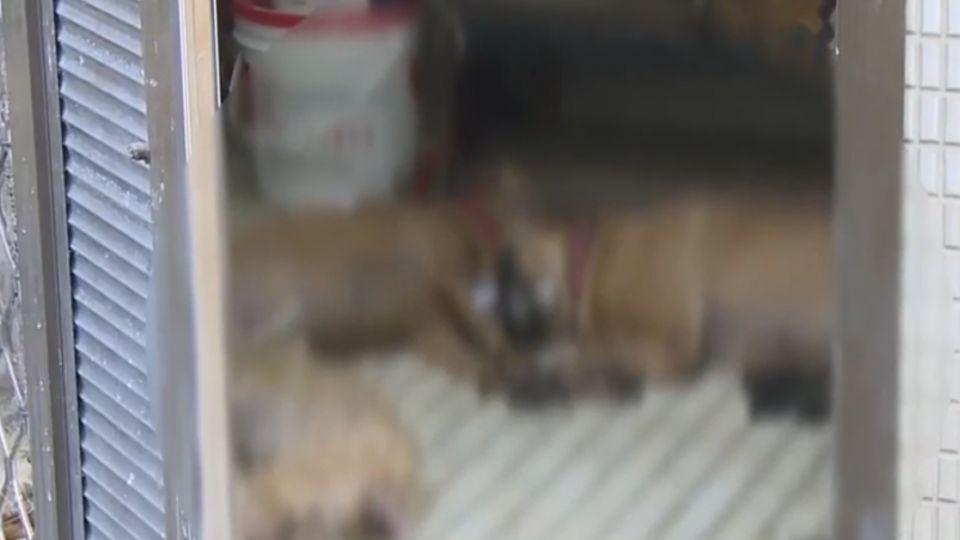 鄰居疑用毒骨頭引誘 5愛犬口吐白沫慘死
