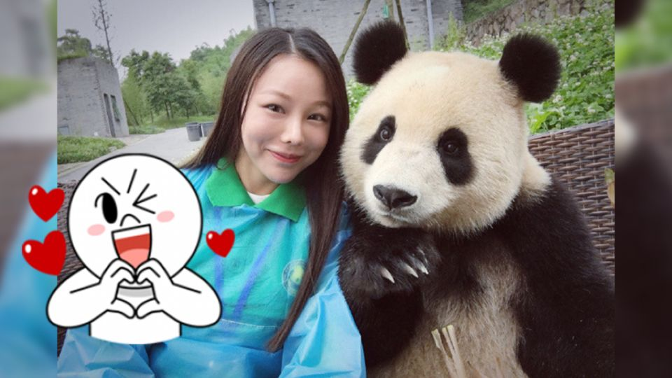 【多圖】找鏡頭、喬角度!這隻貓熊與妹子合照不馬虎 網友笑:心機耶!