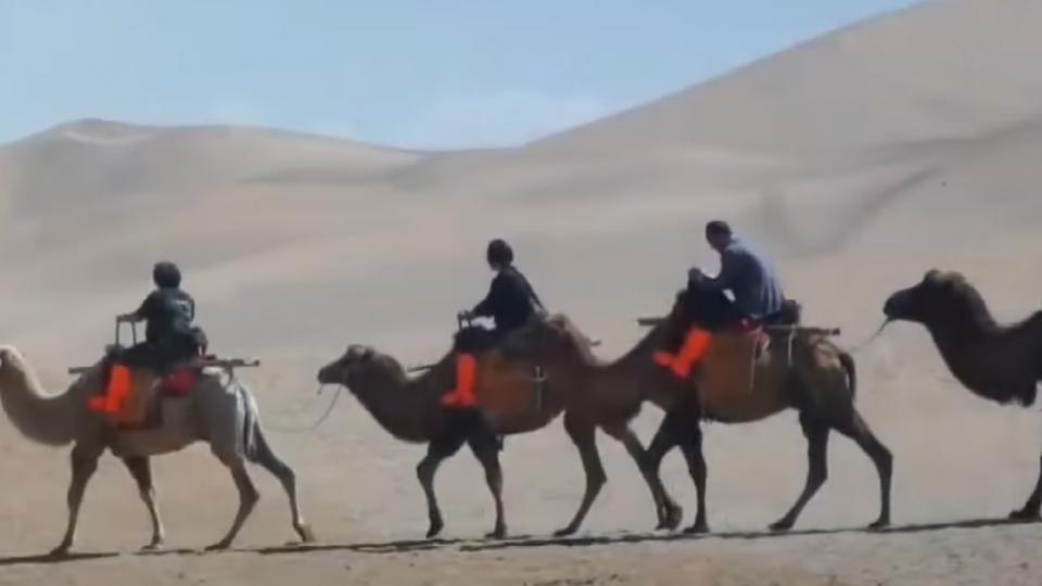 搶賺駱駝財 「絲綢古道」成旅遊黃金線