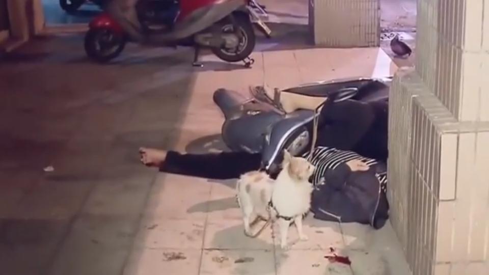 女騎士撞騎樓昏迷 小狗狂吠護主不離開