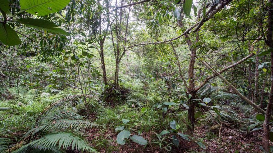 眼力大考驗!這座森林藏了12人 網:隱形斗篷英國人發明的無誤