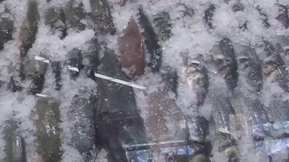 海洋資源幾枯竭 義大利興起「慢魚運動」