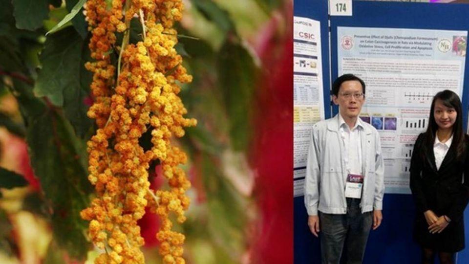最新研究證實 「台灣紅藜」能防大腸癌前期病變