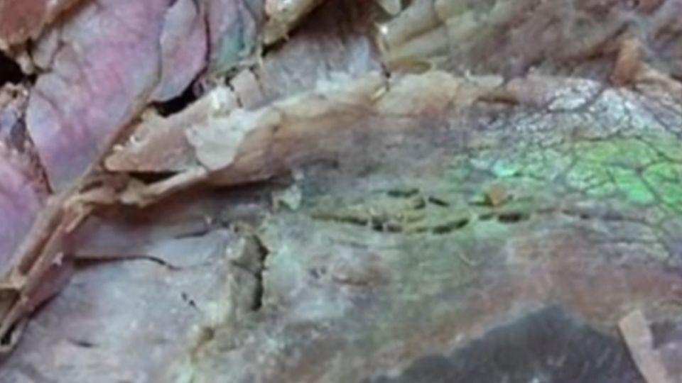 這道「綠光」可以吃?牛、豬肌肉含金屬元素