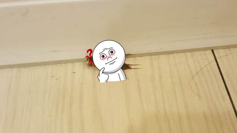 這是什麼蟲?外型長得超詭異 網友驚:是小時候的回憶啊!
