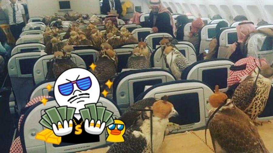 狂!沙烏地王子花錢不手軟 替80隻獵鷹買票搭飛機