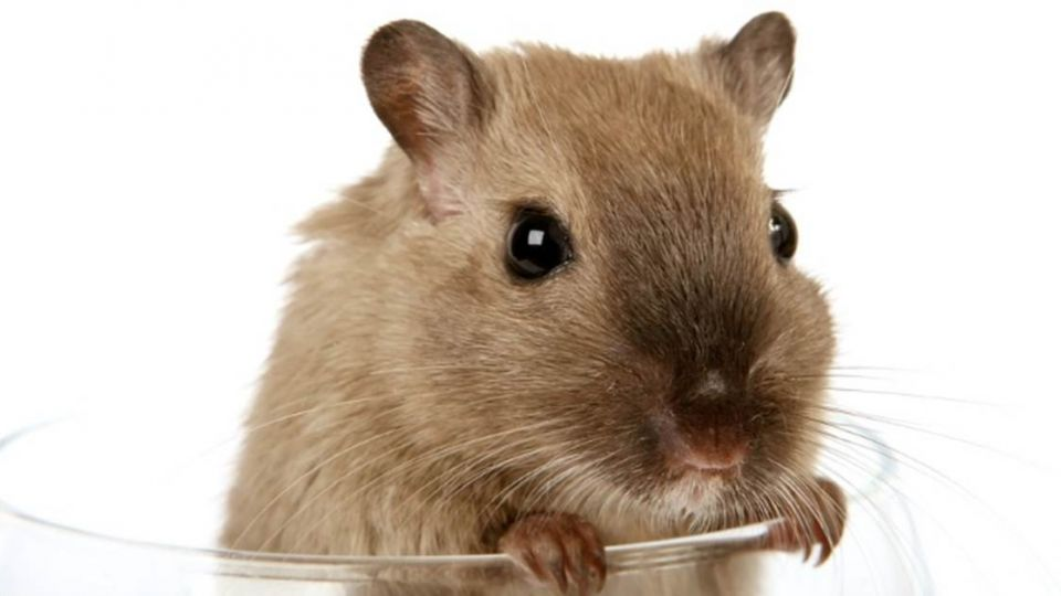 你過的是倉鼠人生嗎?小心被「慣客戶」玩死!