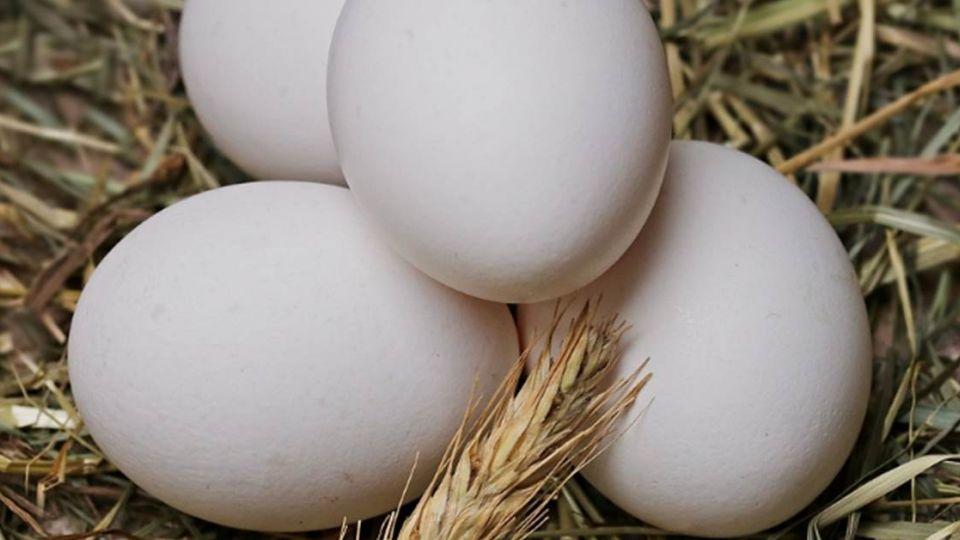 關於雞蛋的5個迷思 有些攸關你的健康