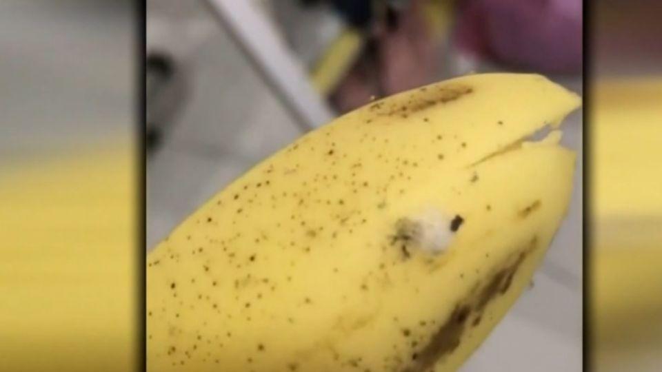 香蕉竄全球最毒蜘蛛 買主驚嚇:吃下可能喪命