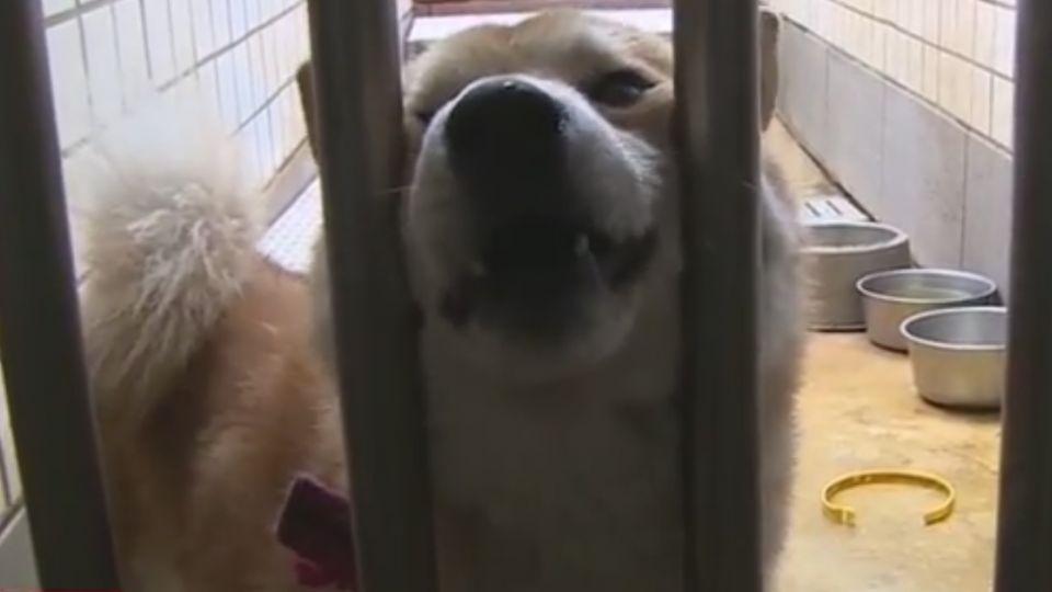 零撲殺上路滿月! 宜蘭收容所爆腸炎撲殺72隻犬
