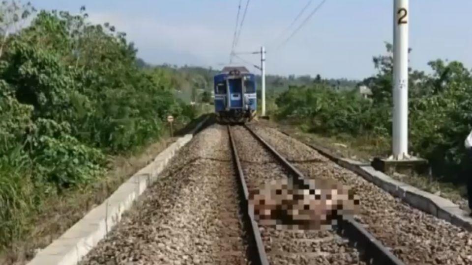 6隻小牛闖鐵軌遭撞死 損失30萬還要賠台鐵