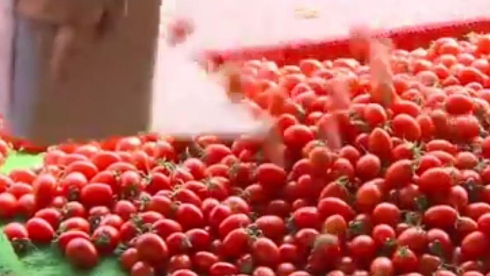 蔡政府放寬農藥標準 藍委:為美國出賣國人