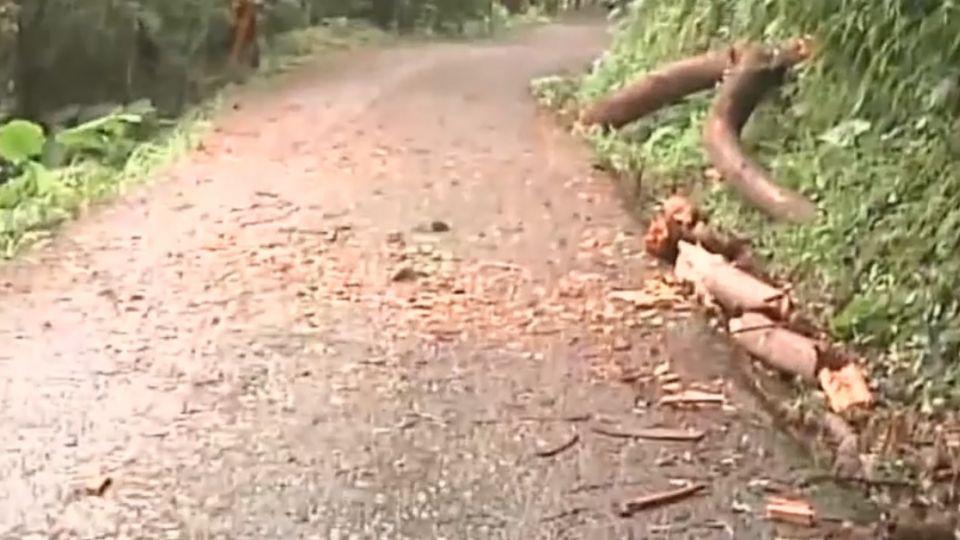賞螢遭枯樹壓傷 1歲幼童顱內出血未脫離險境