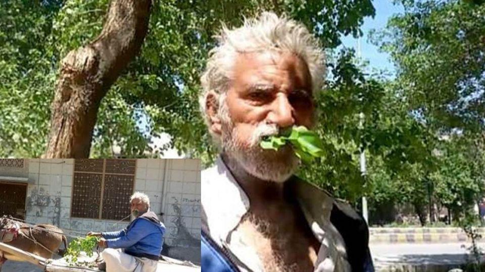 不是吃素是吃「樹」!男子啃樹25載 榕樹葉還是最愛