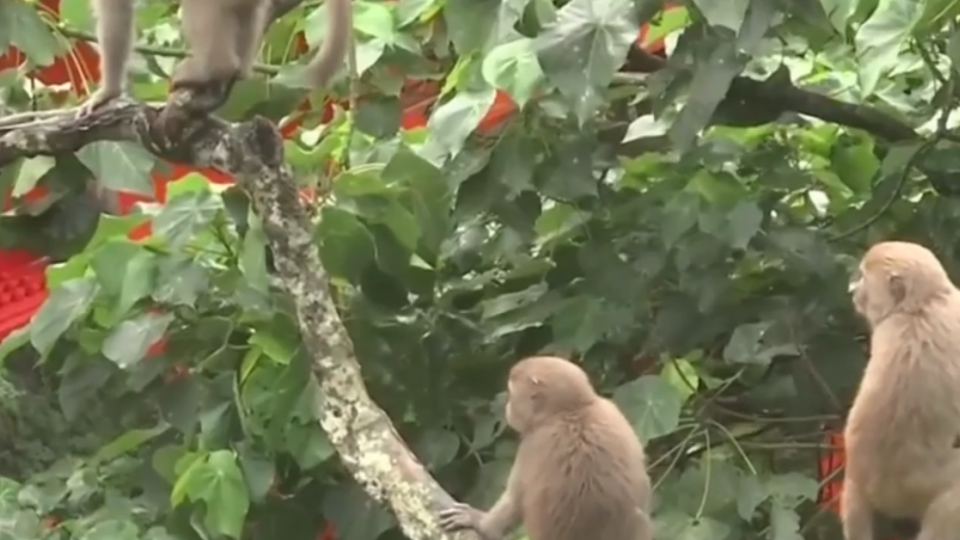 日月潭邊森林5公尺1陷阱 野生動物陷危機