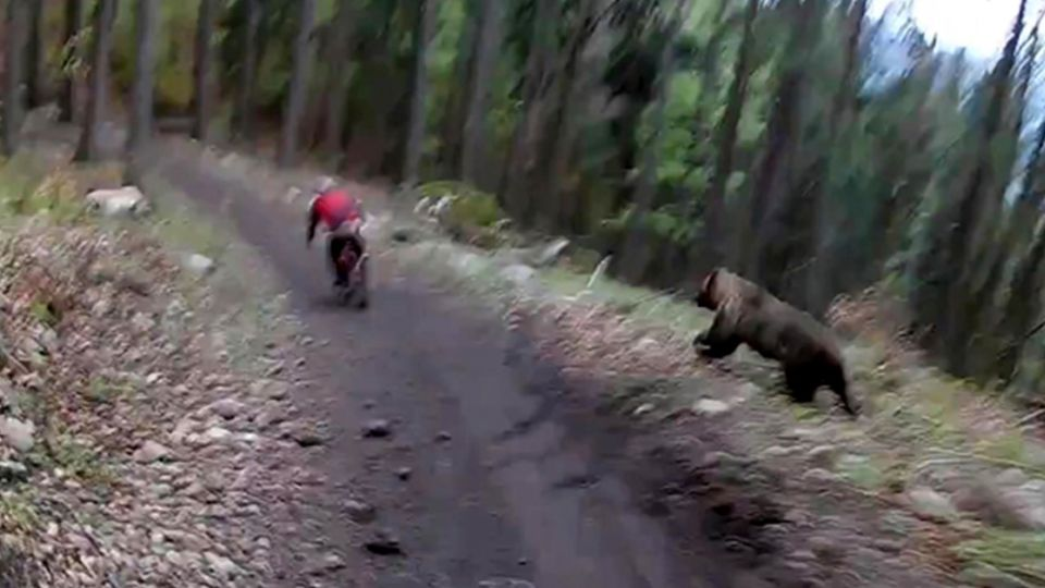 驚魂!山中騎車遭大熊狂追 「兩腳生火」驚險瞬間全都錄