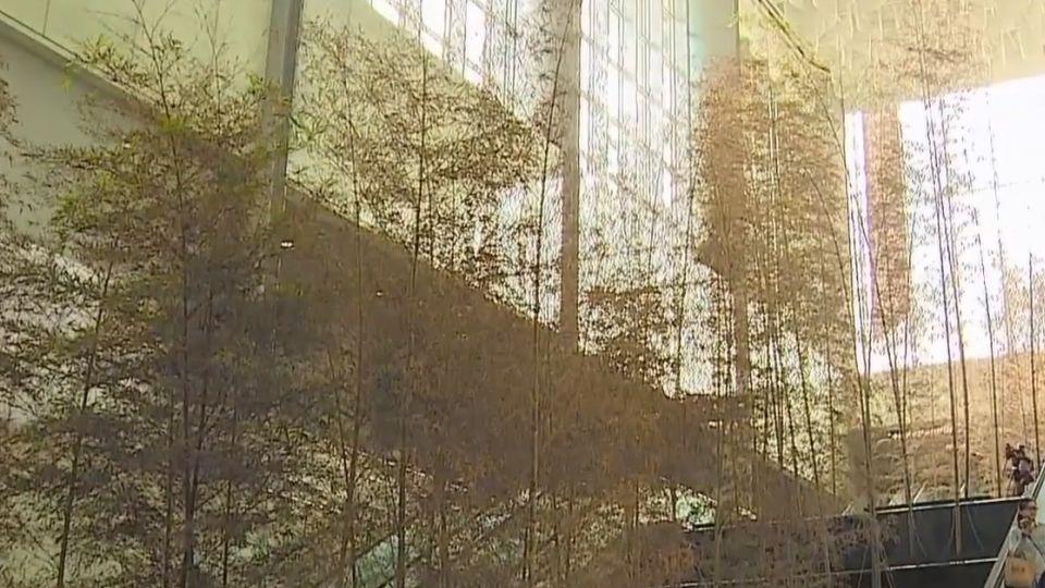 才通車兩個月 機捷「竹林瀑布」已枯黃