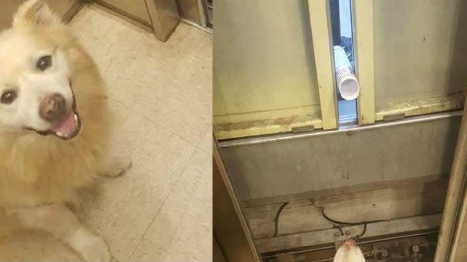 差點閃尿!帶愛犬搭電梯受困 好心鄰居出「法寶」幫消暑
