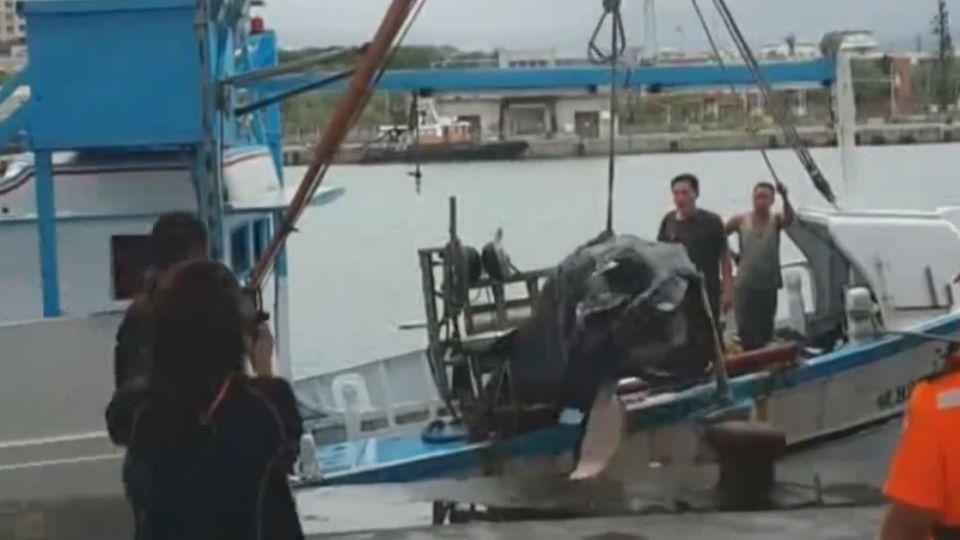 全球只有100隻! 稀有巨口鯊被民眾吃下肚