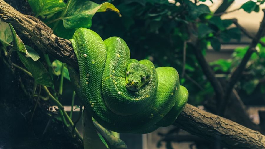 蛇出沒請小心!專家整理「懶人包」教你如何應對