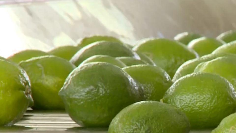 外銷賣「檬」果然厲害 聯手小農千噸登陸