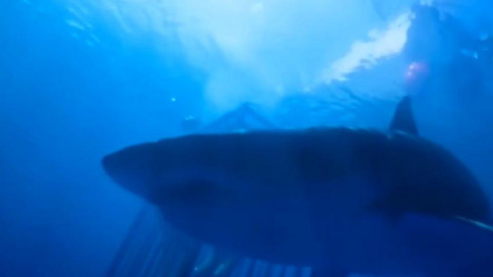鐵籠觀鯊驚險刺激 「深海鯊機」挑戰恐懼極限