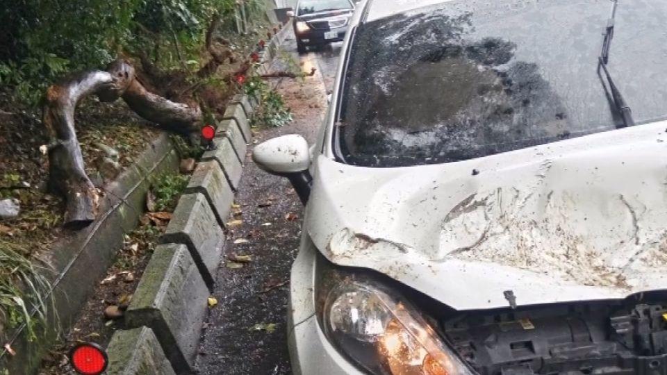 8公尺大樹突倒塌 壓毀轎車駕駛一度受困