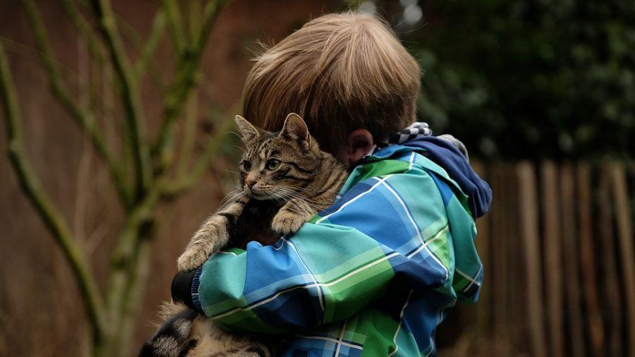 工作只要摸主子!醫診所徵「摟貓人」 幸福奴才月薪上看7萬