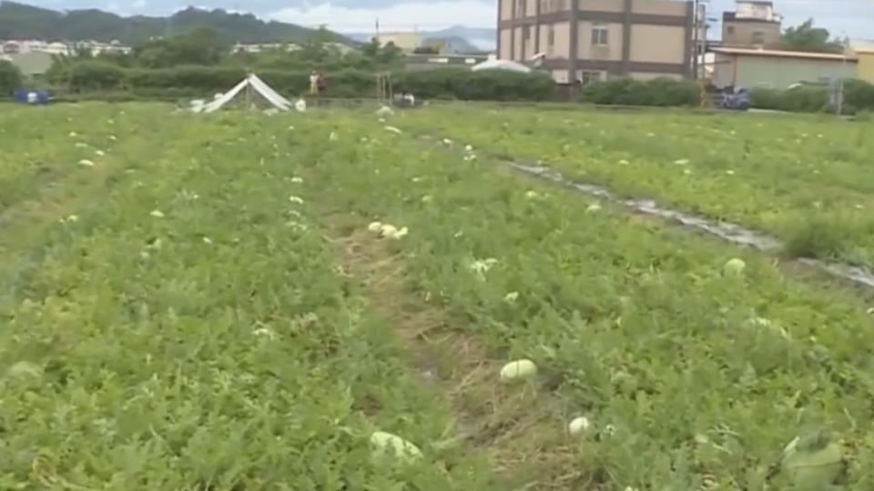 連續豪雨農損慘重 彰水稻毀、西瓜泡水