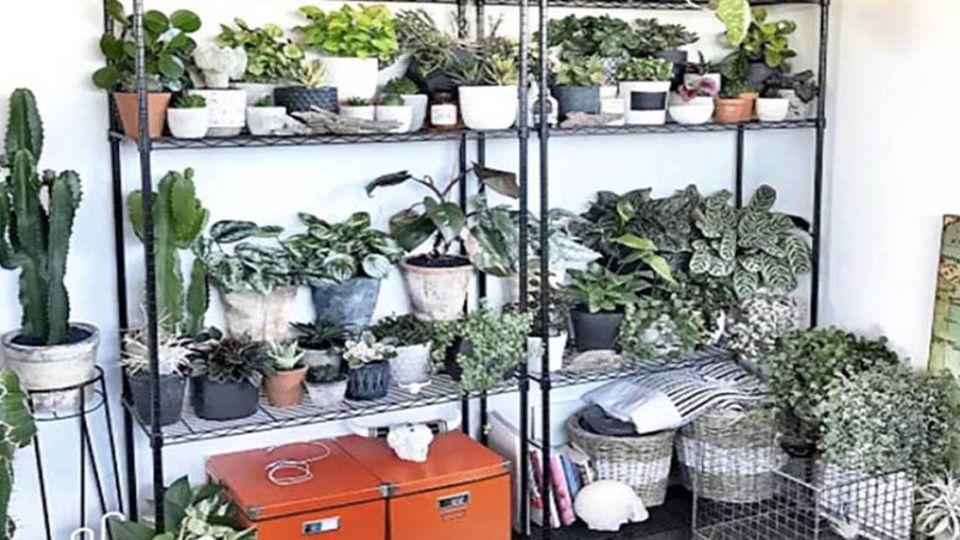 推薦3種室內植栽 好照顧又能淨化不同髒空氣