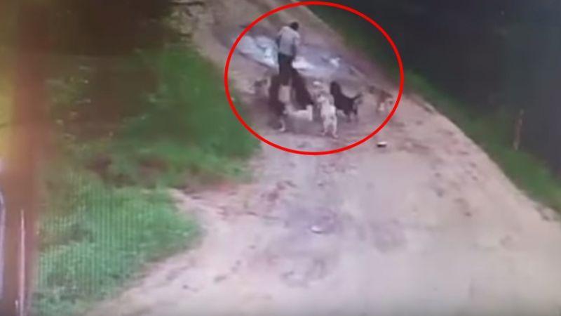 【影片】餵養流浪狗2年…好心警衛酒醉返家 竟遭12犬「圍攻咬死」