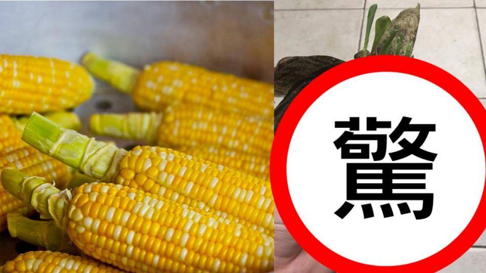 老爸送的玉米「長這樣」 他收到後嚇傻!網驚:看完後不敢吃了