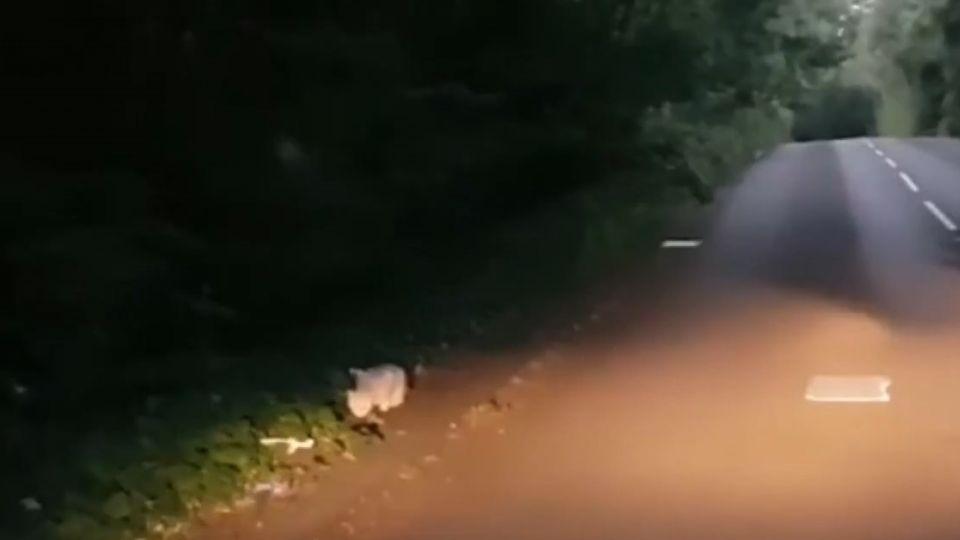 「巨貓出沒注意」英民眾鄉村目擊神秘巨貓