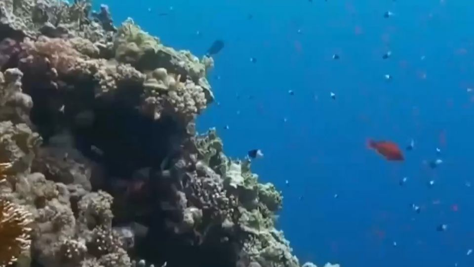 大堡礁「大到不能倒」 經濟價值逾兆台幣