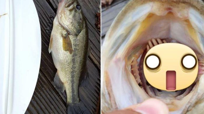 嚇慘!美國男釣起大鱸魚…卻在牠口中驚見「十爪抵口」